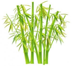 bamboo_chinese