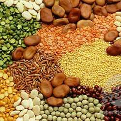food-grains-250x250