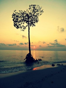 tree in andamans